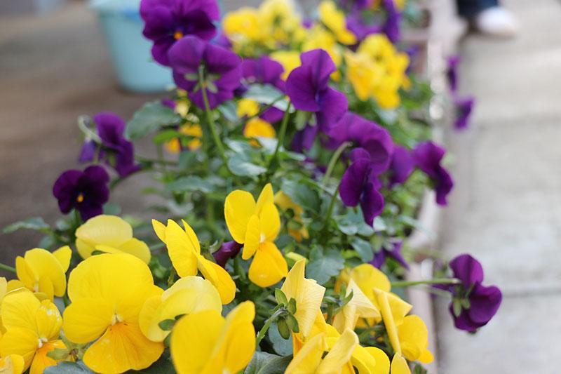 たくさんのお花が目印です